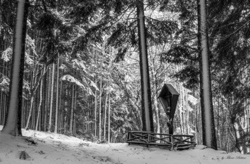 vallombrosa sotto la neve 2 20150218 1837591433